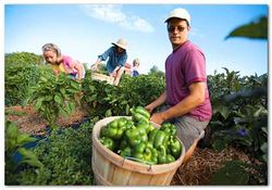 Organic Foods 1 (www.organictobe
